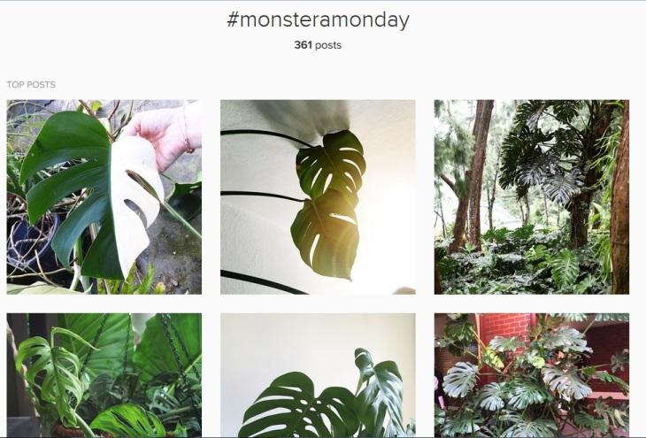 monstera.jpg