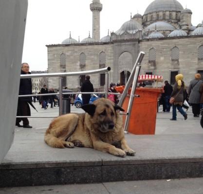 street-dogs-istanbul-2-650x623