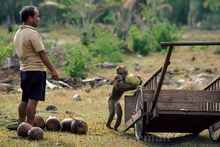 Coconut monkey