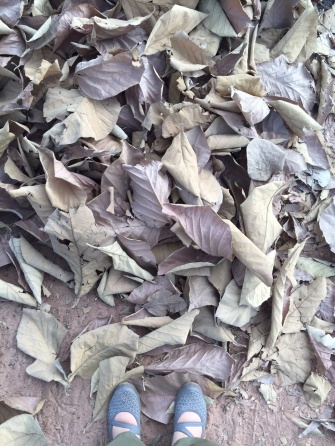 dev yapraklar