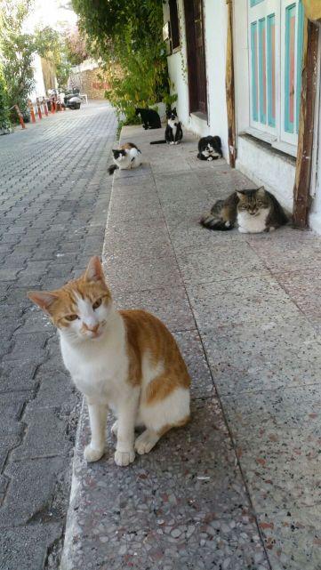 kediler kediler kediler